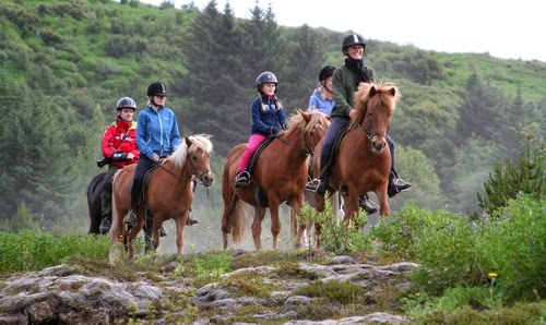 cavalls islandesos Gran Volta Islandia